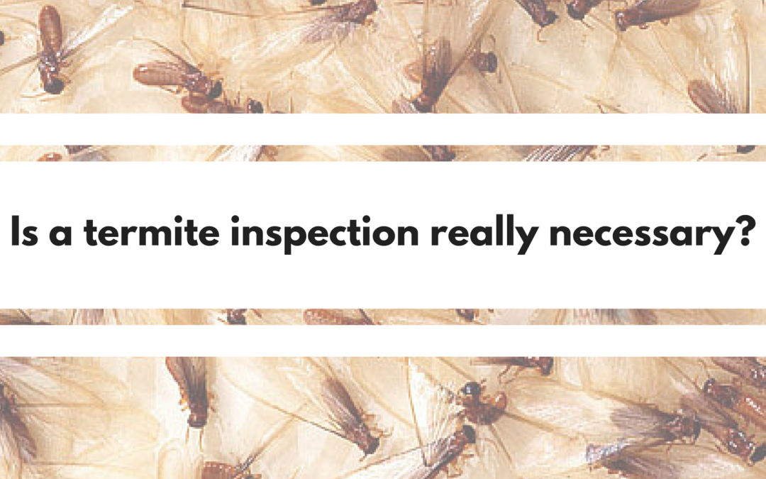 Is Termite Inspection Really Necessary?